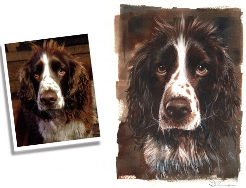 Millie. Our English Springer Spaniel – watercolour portrait.
