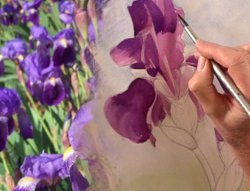 How to Paint..an Iris – A watercolour painting tutorial and Video